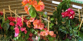 Święto Kwiatów - zdjęcie nr 5