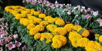 Święto Kwiatów - zdjęcie nr 3