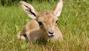 Fot.: www.zoo-goerlitz.de, C. Hammer