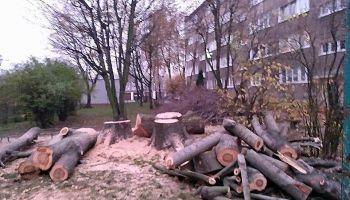 Wycięte przy ul. Warszawskiej drzewa / zdjęcie udostępnione przez czytelnika na redakcyjnym Facebooku