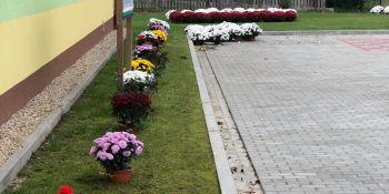 Gminę Zgorzelec przyozdobiły kolorowe chryzantemy - zdjęcie nr 16