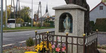 Gminę Zgorzelec przyozdobiły kolorowe chryzantemy - zdjęcie nr 1