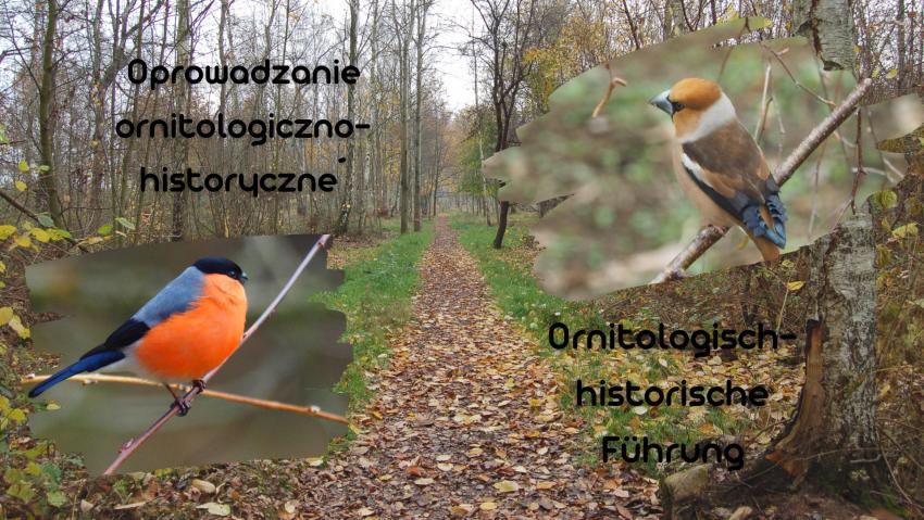 Oprowadzanie z ornitologiem po Miejscu Pamięci Stalag VIIIA