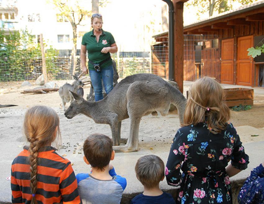 Prezentacja kangurów w Nasze Zoo Görlitz-Zgorzelec / fot. Catrin Hammer