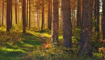 ARIMR: Weź pieniądze i posadź las | fot. UG Zgorzelec