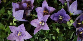 Święto Kwiatów - zdjęcie nr 16