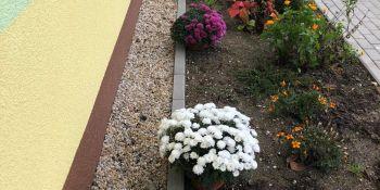Gminę Zgorzelec przyozdobiły kolorowe chryzantemy - zdjęcie nr 13