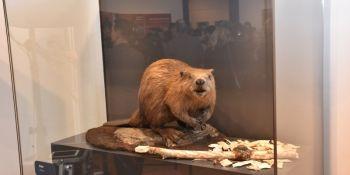 Przygoda z Nysą – Życie nad rzeką: wystawa, którą musisz zobaczyć! - zdjęcie nr 8