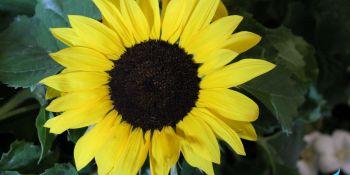 Święto Kwiatów - zdjęcie nr 8