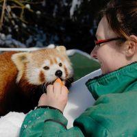 Ekskluzywne spotkania ze zwierzętami w Zoo Görlitz
