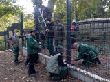 a6d-ostatnie-prace-przy-budowie-nowego-ogrodzenia-w-naszym-zoo-fot-www-zoo-goerlitz-de-i-plath-e6e8_160x120