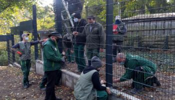 Ostatnie prace przy budowie nowego ogrodzenia w Naszym Zoo / fot. www.zoo-goerlitz.de, I. Plath