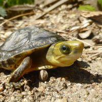 Ogrody zoologiczne zwiększają działania na rzecz ochrony gatunków