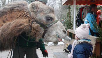 Fot. www.zoo-goerlitz.de, I.Plath