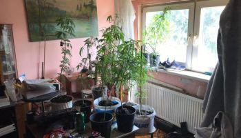 Pomieszczenie, w którym znajdowały się doniczki z roślinami konopi / fot. KPP Zgorzelec