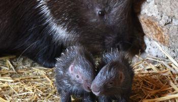 Fot. www.zoo-goerlitz.de, C. Hammer