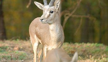 Fot. www.zoo-goerlitz.de,C.Hammer