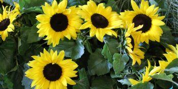 Święto Kwiatów - zdjęcie nr 4