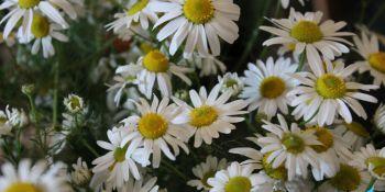Święto Kwiatów - zdjęcie nr 17
