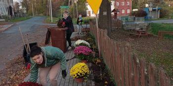 Gminę Zgorzelec przyozdobiły kolorowe chryzantemy - zdjęcie nr 17